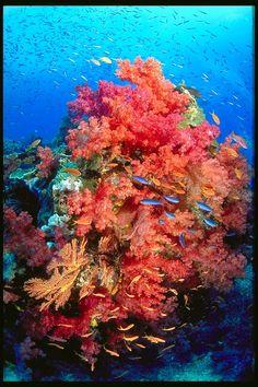 Grande Barreira de Recifes de Corais, Australia.