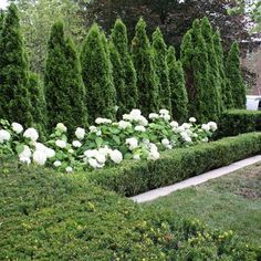 All Time Best Useful Ideas: English Garden Landscaping Water Features rock garden landscaping house.Garden Landscaping With Stones Inspiration cottage garden landscaping spring. Boxwood Garden, Hydrangea Landscaping, Landscaping With Rocks, Front Yard Landscaping, Boxwood Hedge, Landscaping Design, Formal Gardens, Outdoor Gardens, Outdoor Topiary