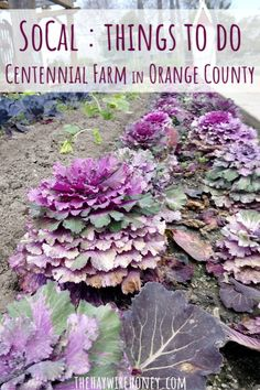 Where to take your kids in Orange County, California. Centennial farm is a great place for kids to learn and explore. Orange County Fair, Orange County California, Southern California, California With Kids, California Travel, Colorado Winter, Skiing Colorado, Iowa State Fair, Travel Inspiration