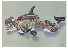 NYCHOS | DISSECTION OF AN ORCA (acrylic on canvas)...