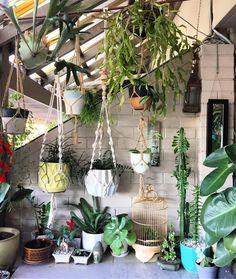 I'm always rearranging plants... #succulents #potplants #hangingplants #rhipsalis #macrameplanthanger #imaplanthoarder