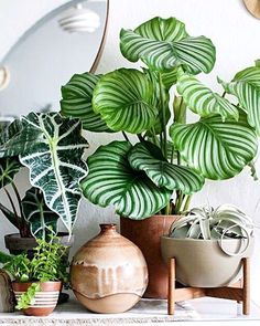 Large leaf plants, with modern plant stand.