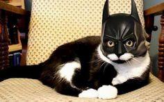 #Funny #Cat #Batman