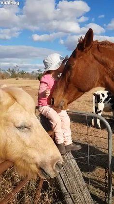 Funny Horses, Cute Horses, Horse Love, Beautiful Horses, Animals Beautiful, Horse Girl, Funny Horse Quotes, Funny Horse Videos, Cute Funny Animals