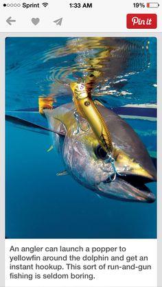 Fish in the ocean hookup service