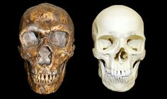 Scientists have concluded that Neanderthals were not the primitive dimwits they are commonly portrayed to have been.