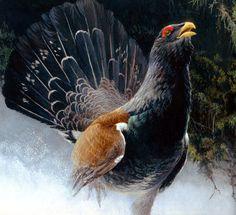 Bird Gif, Wildlife Art, Animal Paintings, Painting & Drawing, Hunting, Birds, Fine Art, Art Prints, Drawings