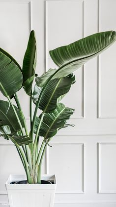 Download premium image of Plant by a white wall mobile phone wallpaper by Felix about elegance, minimalism wallpaper, interior, plants home, and indoor plant 1224501
