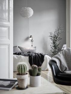 Greys + indoor cacti