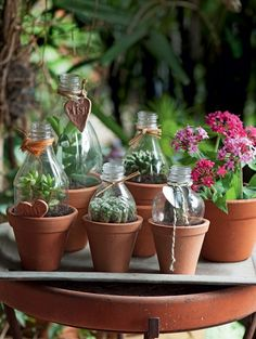Suculentas: ideias criativas para ter essa planta em casa