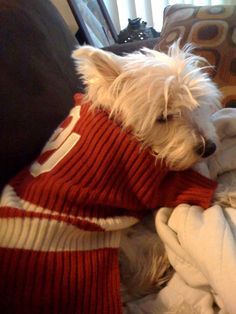 Mariella. Boomer Sooner.   (I need to find an OU sweater for my Daisy!  Two of my favorite things, Westies and OU!)