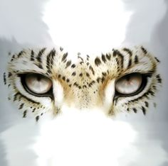 Perfect leopard's eyes design.