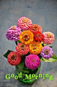 Blossom Garden, Blossom Flower, Exotic Flowers, Fresh Flowers, Flower Vases, Flower Arrangements, Zinnia Garden, Let's Make Art, Good Morning Flowers