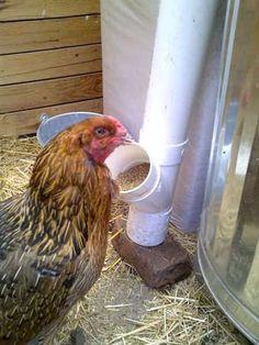 fabriquer distributeur graines poules tuyau