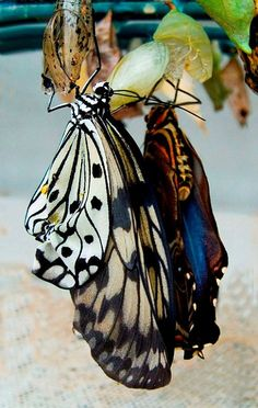 """""""There is nothing in a caterpillar that tells you it's going to be a butterfly."""" - R. Buckminster Fuller"""