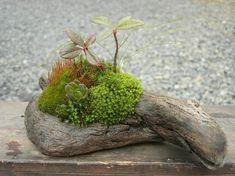 流木 新作 - 小さな緑のインテリア こけや