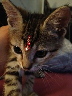 It's a cat, with a bindi....... <3