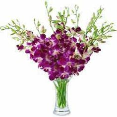 "If your love is pure and chaste, ""Purple Pure"" is a fantastic way of expressing heartfelt sentiments in the most beautiful way. •	An exquisite floral arrangement of 15 purple orchids, defining purity and poise http://flowershop18.in/flowers-to-kolkata.aspx"