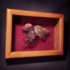 When Pigs Fly - Real Dry Preserved Fetal Pig with Sparrow Wing on Red Damask Framed Display by BoneLust on Etsy