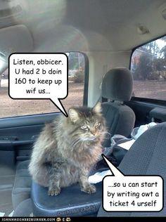 funny cat pictures - BTW, I like teh lites