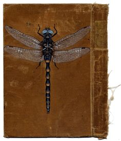bugs painted on book covers by Bristol-based artist Rose Sanderson