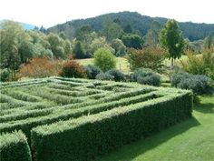 The hedge maze at Orinoco Cottage.