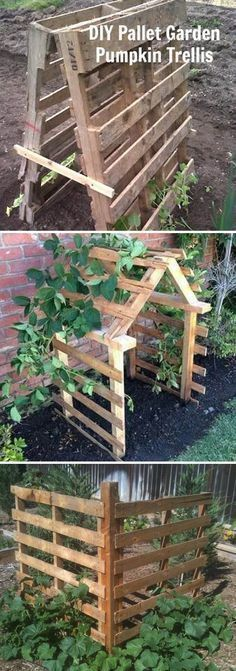 Pallets Can be Easily Made into Garden Trellis #gardening #gardeningtips #gardentrellis #pallets #verticalvegetablegardens