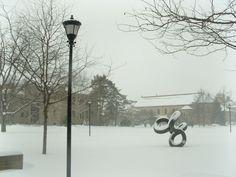 Snowy Oberlin.
