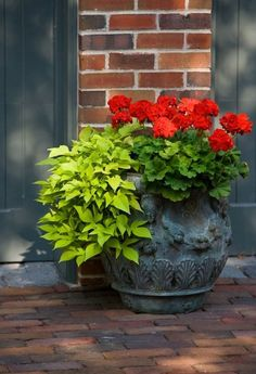Geraniums and sweet potato vine...my pots in front of the house almost every year.  Fool proof!