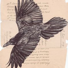 bic biro drawing http://www.markpowellartist.com/