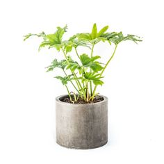 Mateo Composite Pot Planter  by My Spirit Garden, Large