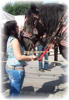 Das Glück der Erde liegt auf dem Rücken der Pferde <3