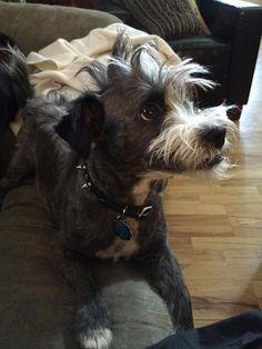 My punk rock dog...