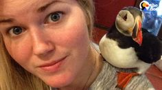 Rescued Puffin Spoiled By New Mom | The Dodo