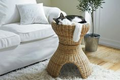 Feline fantasy ... IKEA's Bastis cat bed