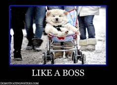 demotivational posters, demotivating posters, funny posters, posters,  like a boss, dog, stroller, baby carriage. FOLLOW MY BOARD! :)