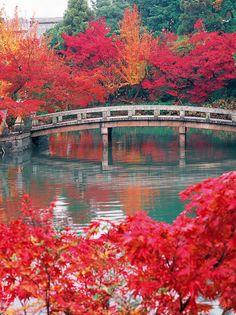 京都市北西部に位置し、京都屈指の紅葉の名勝として親しまれる「三尾」こと高雄・槇尾・栂尾。その高雄山の中腹にある神護寺は、清滝川にかかる高雄橋から紅葉のトンネルをくぐって辿り着く、道のりも美しい古刹です。開山、和気清麻呂の私寺とされる神願寺と高雄山寺という二つの寺院が天長元年(824年)に合併し、寺号「神護国祚真言寺(じんごこくそしんごんじ)」、略して神護寺と改められました。空海(弘法大師)が真言密教の礎を築いた寺として高名で、東寺、高野山金剛峰寺に並ぶ真言密教の寺院です。幾度の荒廃の後に見事復興し、国宝の薬師如来像をはじめ、平安時代や鎌倉時代から伝わる寺宝を数多く保有。また、境内の一番奥にある地蔵院の庭から、素焼きの皿を投げる「かわらけ投げ」も人気。錦雲峡に向けて思いっきり皿を投げれば、厄除け効果も期待できそうです。 Autumn Scenes, Japanese Landscape, Kyoto Japan, Future Travel, Places To Go, Waterfall, Beautiful Places, Scenery, Art Gallery