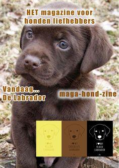 hier is het thema bruin hondje