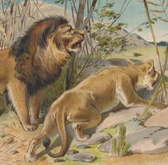 1890s Antique Print Lion and Lioness D9 by OldPrintLoft on Etsy, €21.90