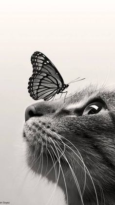 Cute Baby Cats, Cute Baby Animals, Kittens Cutest, Cats And Kittens, Cute Cat Wallpaper, Animal Wallpaper, Disney Wallpaper, Beautiful Cats, Animals Beautiful