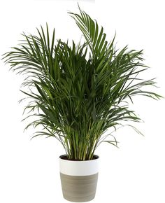10 Houseplants That Need (Almost) Zero Sunlight - House Fur Indoor Plants Low Light, Best Indoor Plants, House Plants Decor, Plant Decor, Permaculture, Best Air Purifying Plants, Perennial Flowering Plants, Household Plants, Decoration Plante