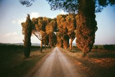 trees, evening, road, wave, sunset