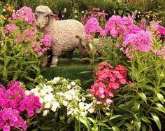 Come and see the sheep flocking in our perennial area. Flocking, Perennials, Sheep, Garden Sculpture, Outdoor Decor, Perennial