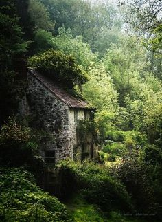 Cottage in the woods with Hozier vibes