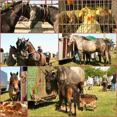 Mustavalkoisesti: Unkari Horses, Animals, Animales, Animaux, Horse, Animal Memes, Animal, Animais, Dieren