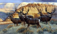 Wildlife Artist Cynthie Fisher Deer Picture Art Print The Boys Club Wildlife Paintings, Wildlife Art, Animal Paintings, Deer Paintings, Hunting Painting, Hunting Art, Hunting Dogs, Deer Pictures, Hunting Pictures