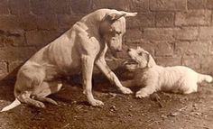 (now extinct) White English Terrier and Glen of Imaal Terrier?
