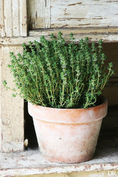 9 Herb Cures You can Grow at Home!   Healthy Food Mind