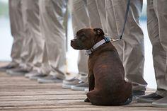 Dog In Rustic Wedding