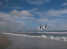 Fly Together >> Beach and Shore Birds by steffro1, via Flickr